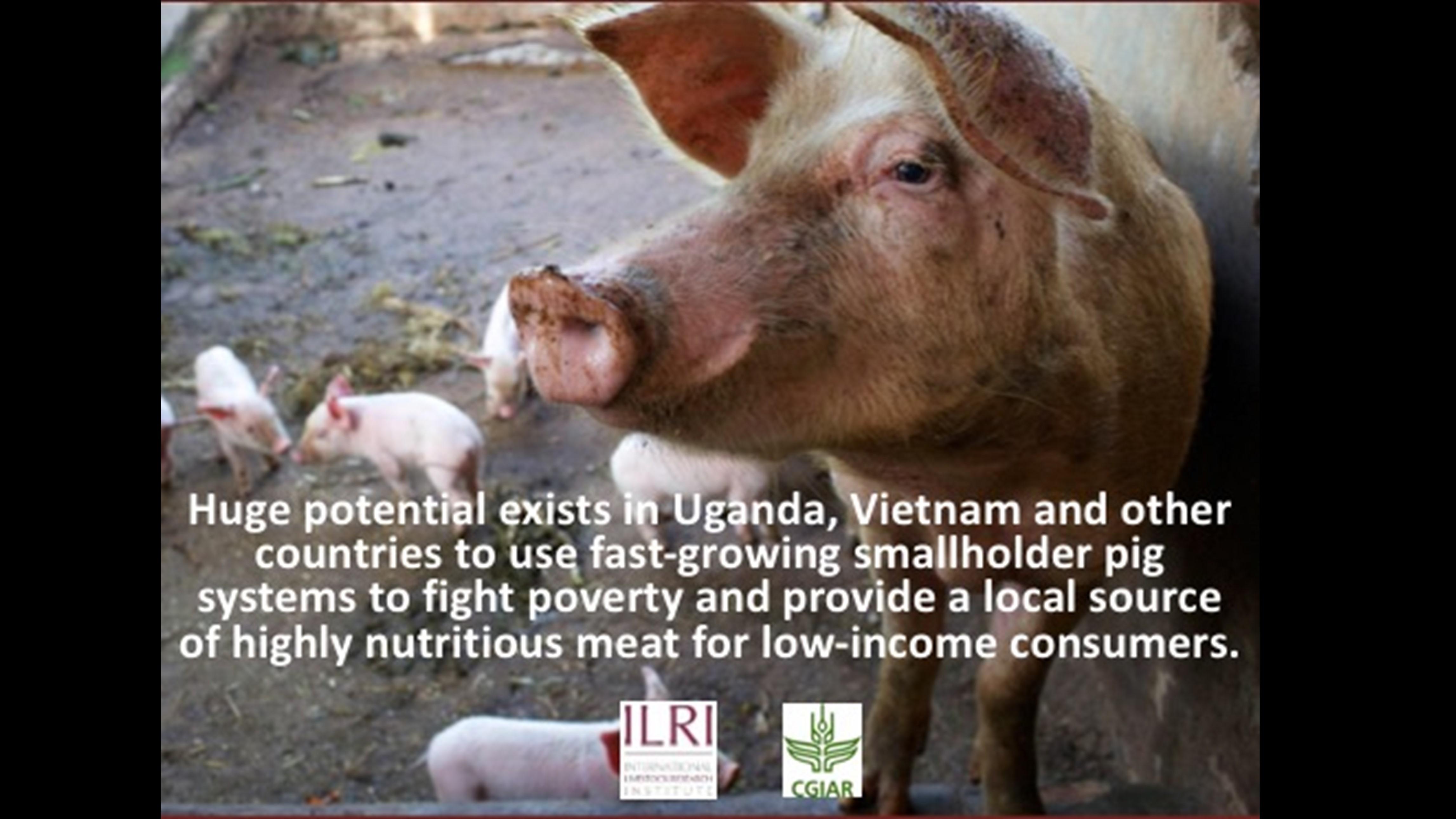 Smallholder Pig Systems