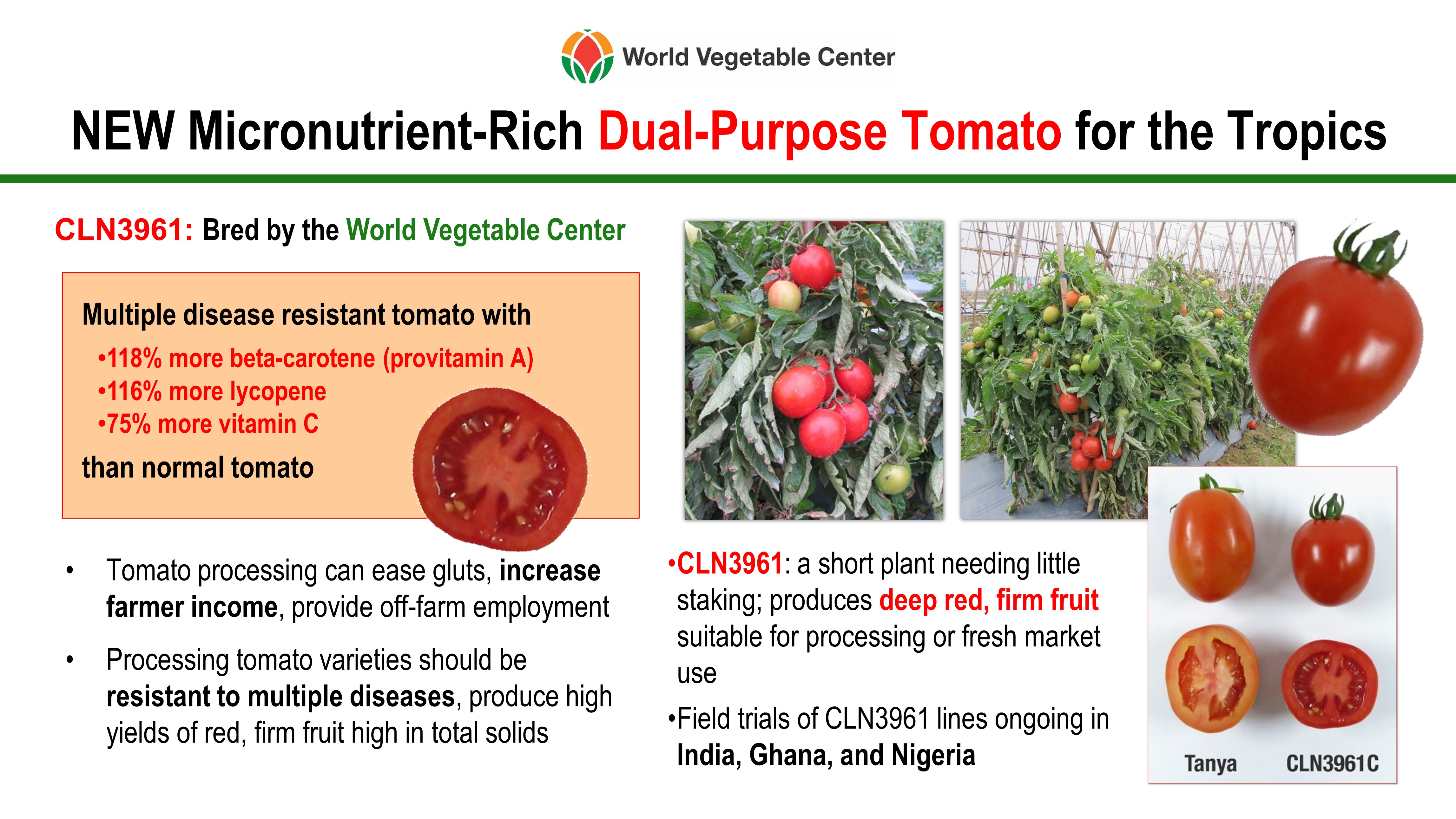 New Micronutrient-Rich Dual-Purpose Tomato for the Tropics